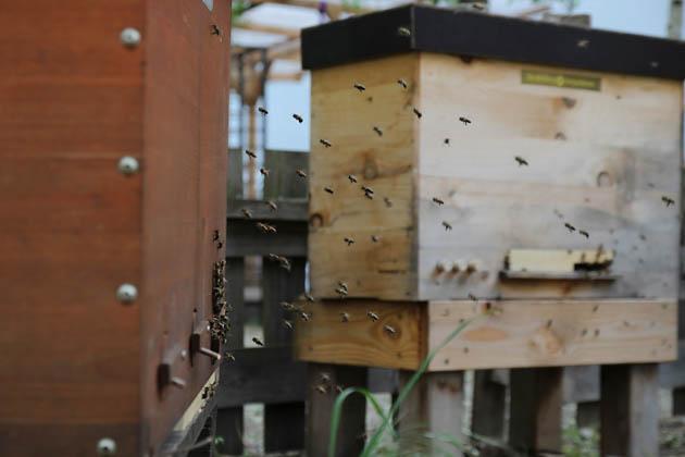Bee positive. Foto: Katerina Karanika